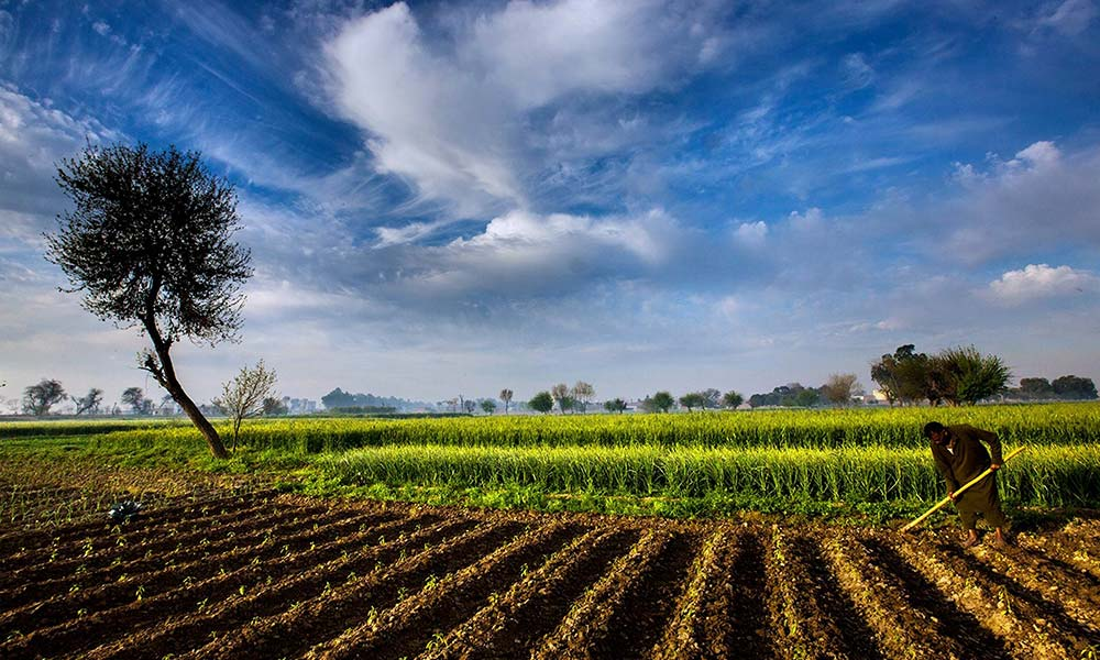 Image result for Panaji agriculture